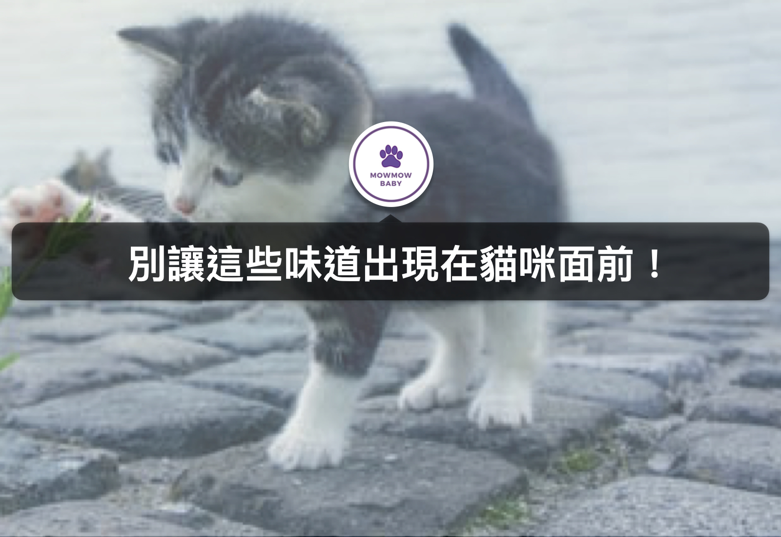 貓奴必知! 貓咪最討厭的味道! 不喜歡就會立馬跑走的3種氣味