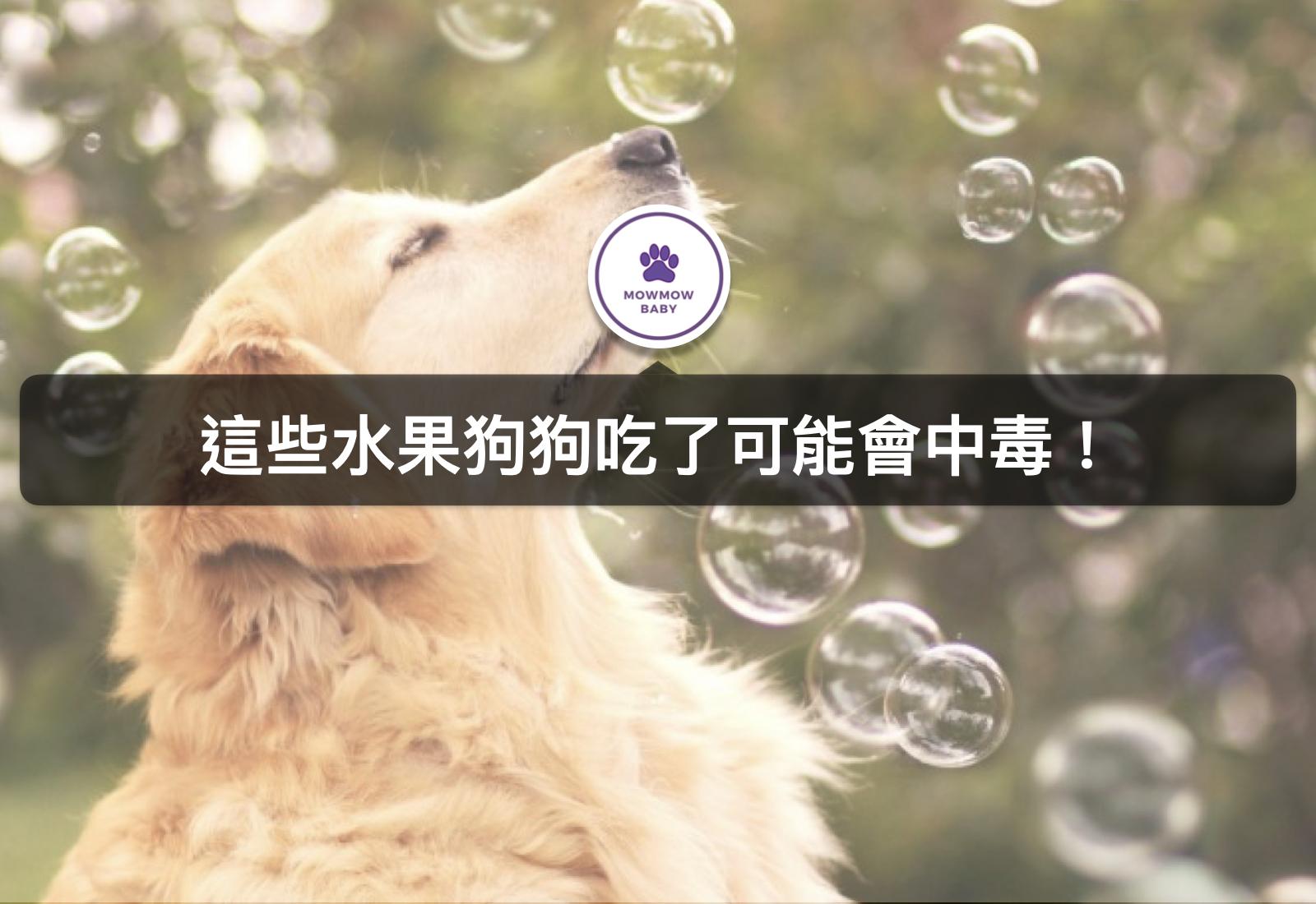 狗狗不能吃這3種水果,寵物吃了可能會中毒的食物!