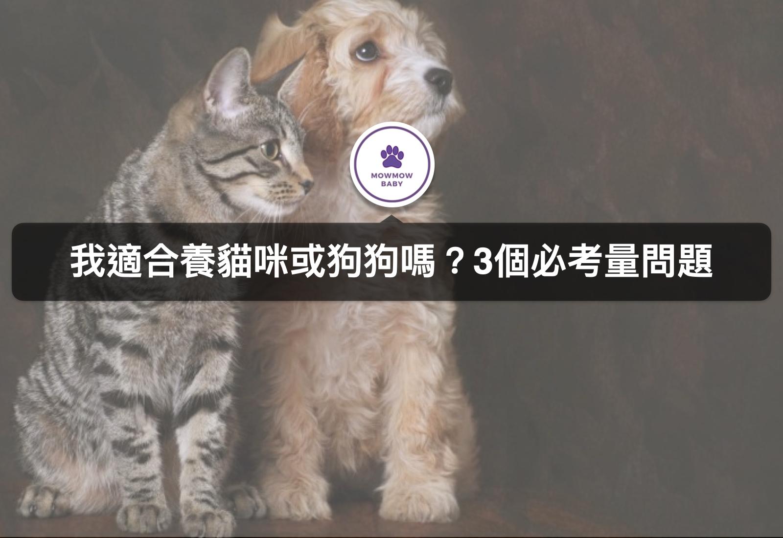 想養寵物需要注意什麼?三大貓狗飼養必懂須知!