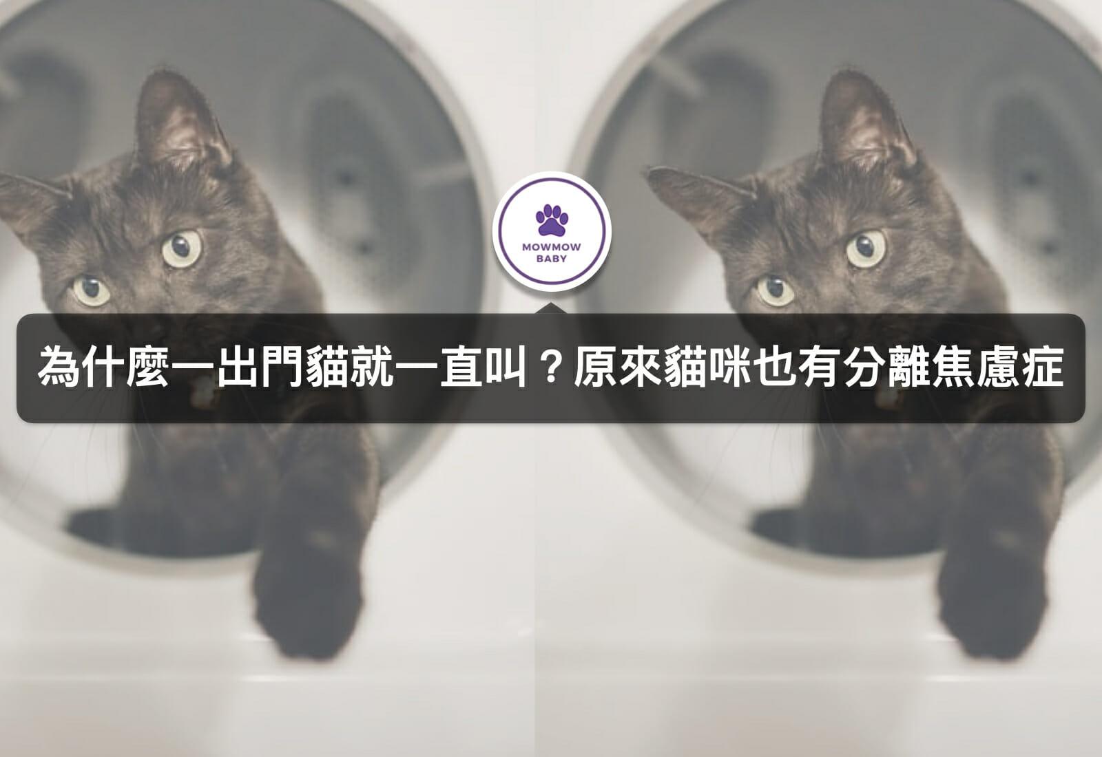 分離 不安 症 猫