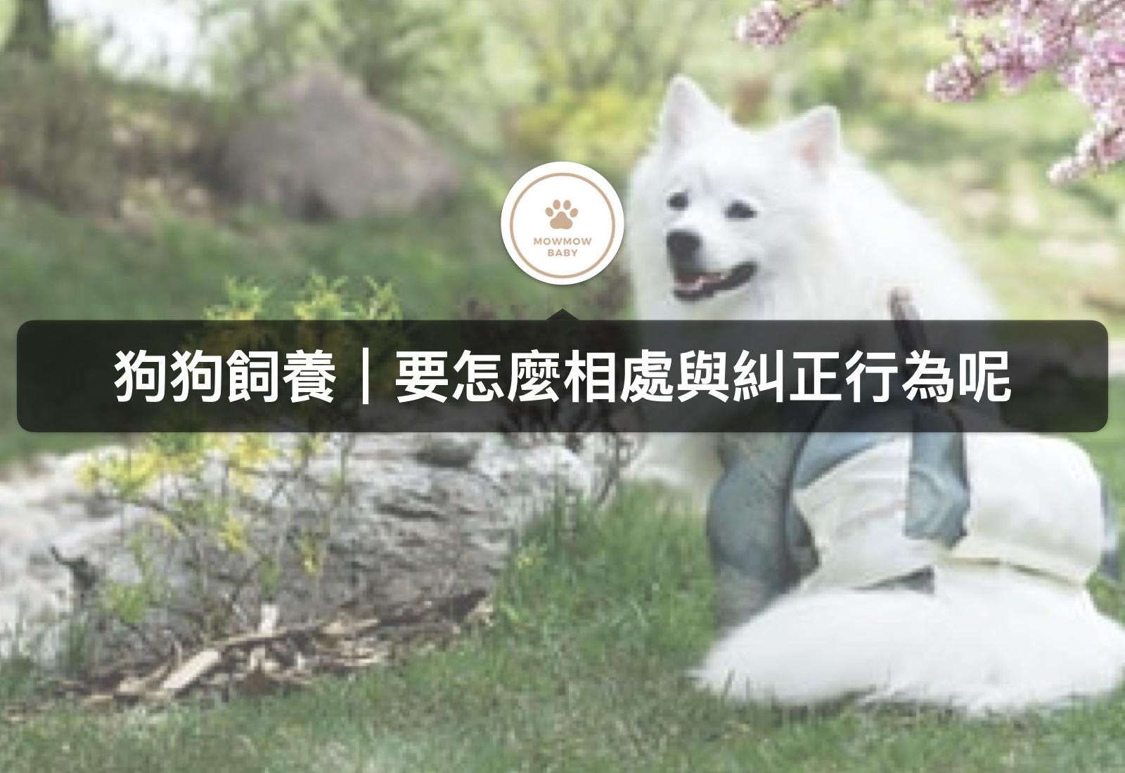 狗狗行為|狗狗飼養時該如何訓練狗狗?