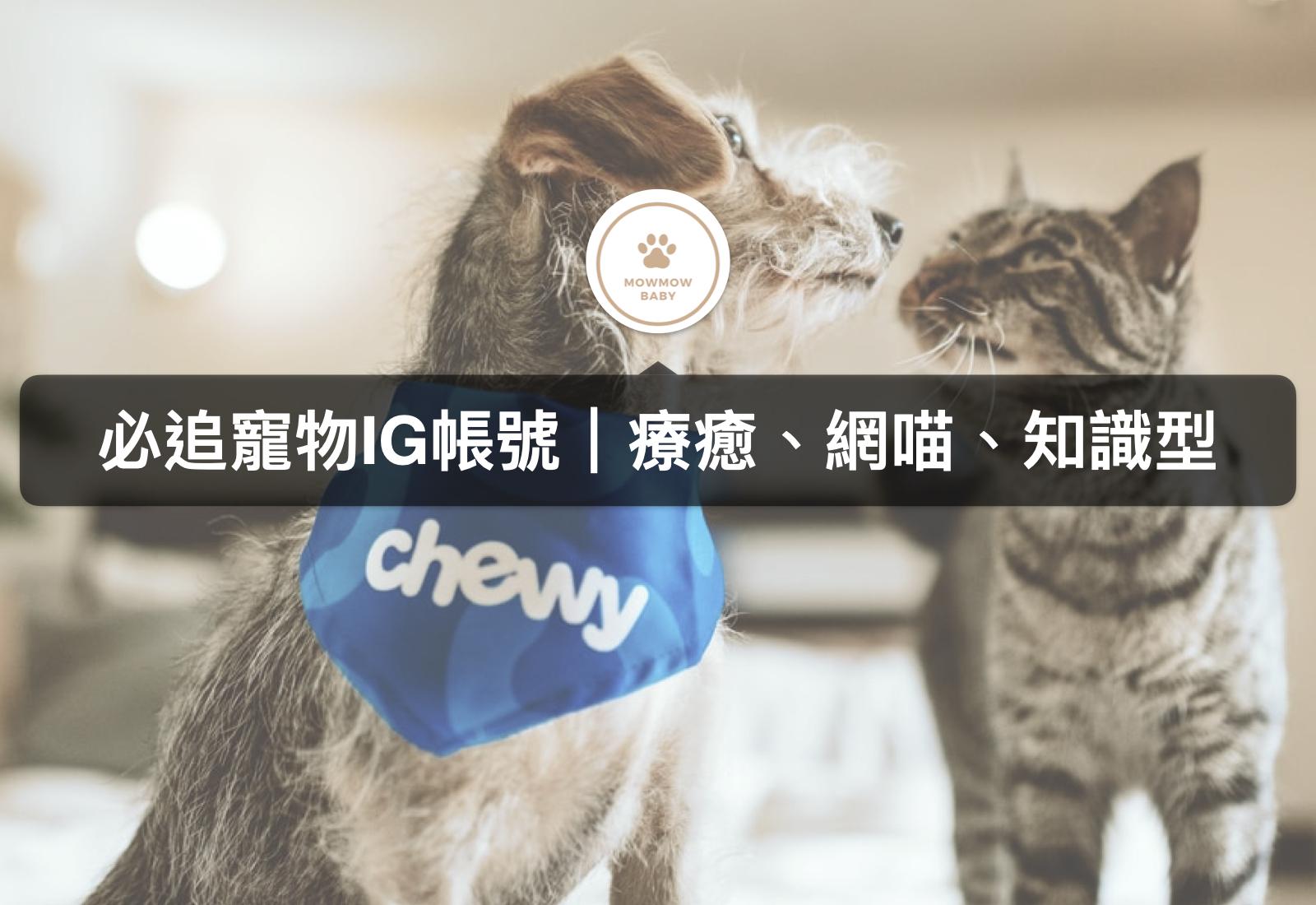 喵星人集合之貓IG帳號推薦|手繪、網喵、知識型你喜歡哪個類型?