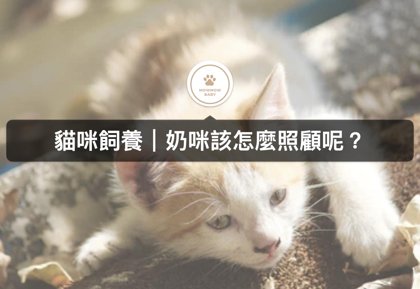 【飼養奶貓】奶貓照顧要特別注意什麼?