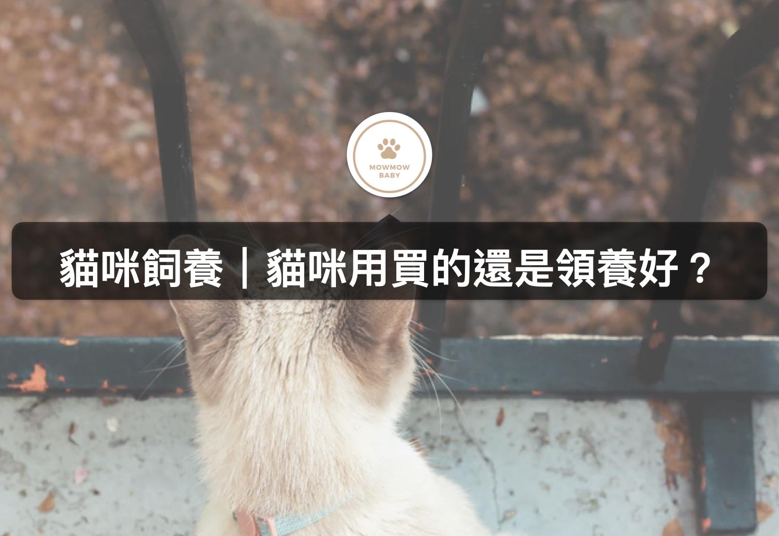 貓咪飼養|想養貓的你,在買貓或收養貓之間猶豫不決?!