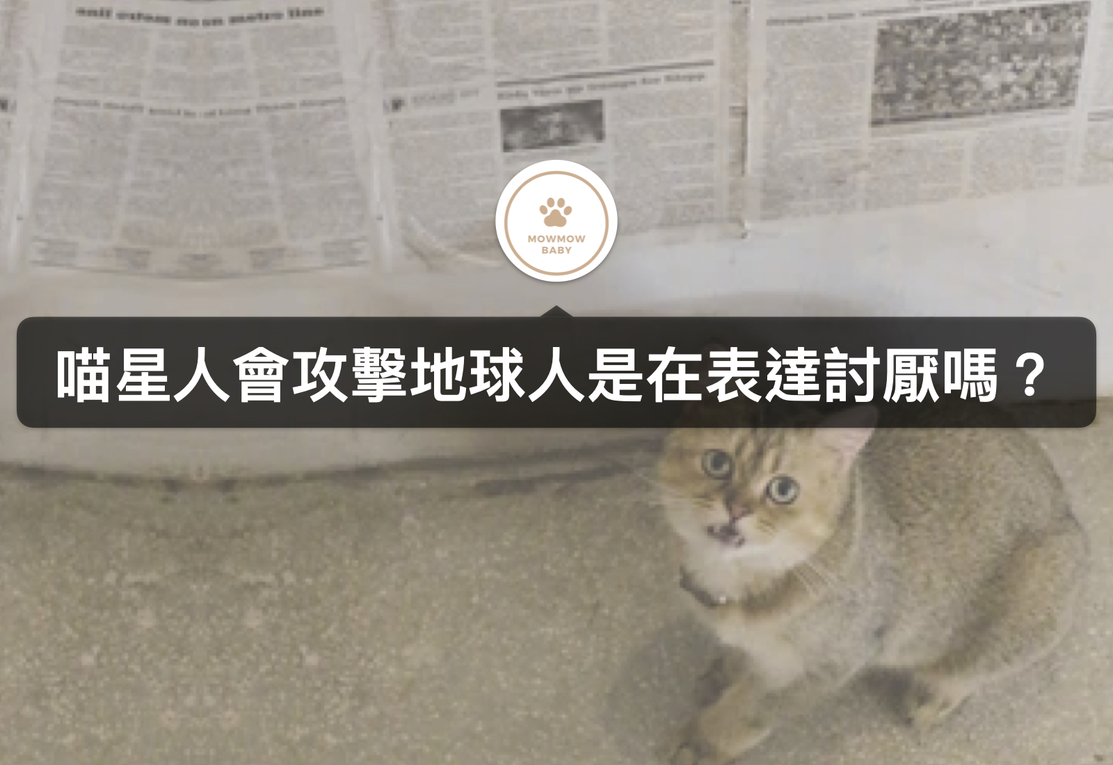 貓咪突然失控抓狂!甚至出現貓攻擊人的行為是為什麼?