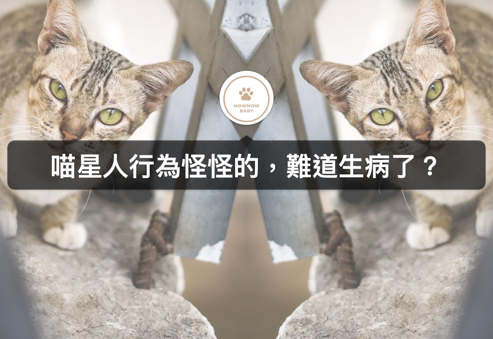 貓咪健康|貓是生病了嗎?飼養貓要注意的事項有哪些