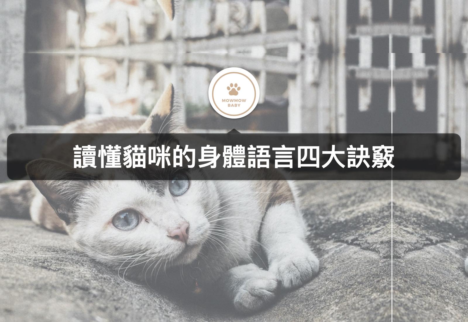 想跟貓咪有近一步的關係,就要先了解貓咪的身體語言!