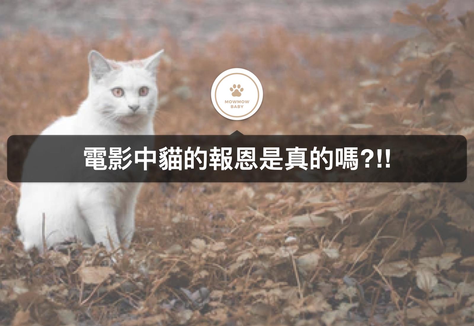 貓咪行為|貓咪送小強是在報恩嗎?!