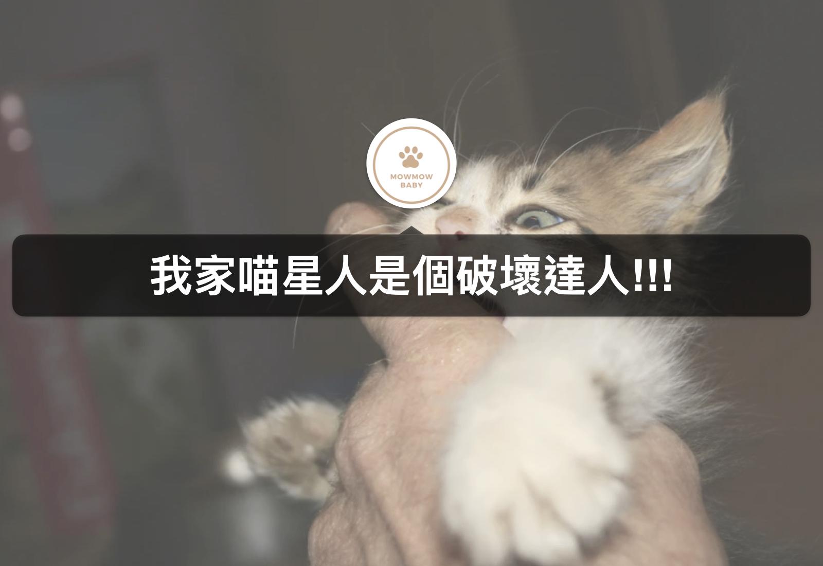 貓咪行為|貓星人可以不要再抓咬沙發了嗎?!