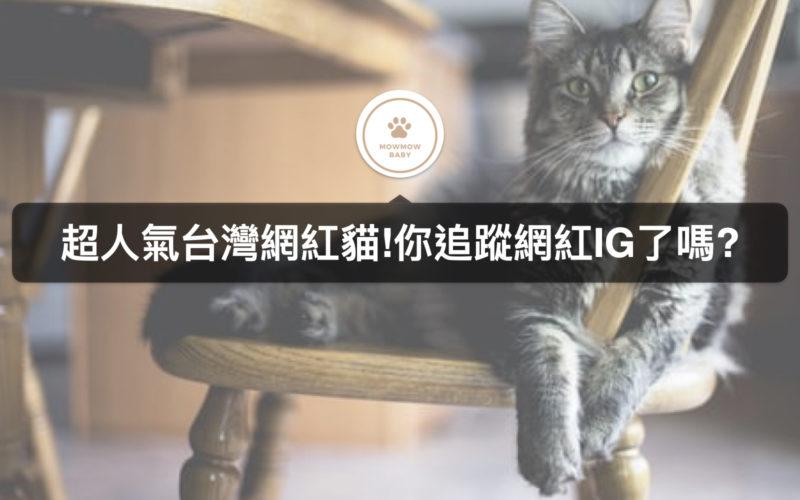 療癒貓咪大集合 5個網紅貓IG帳號你追了嗎?