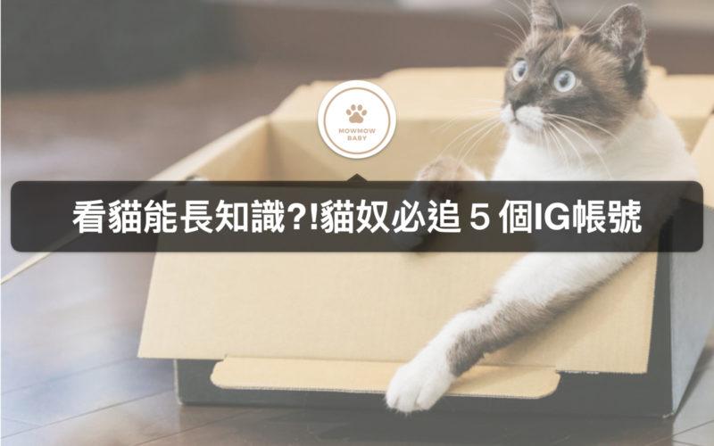【喵星人IG】可以學習貓知識的5個貓IG帳號
