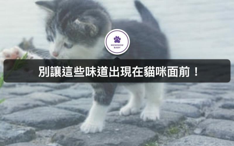貓奴必知! 貓咪最討厭這些味道! 一聞到就會立馬跑走的X種氣味 螢幕閱讀器支援功能已啟用。 貓奴必知! 貓咪最討厭這些味道! 一聞到就會立馬跑走的三種氣味