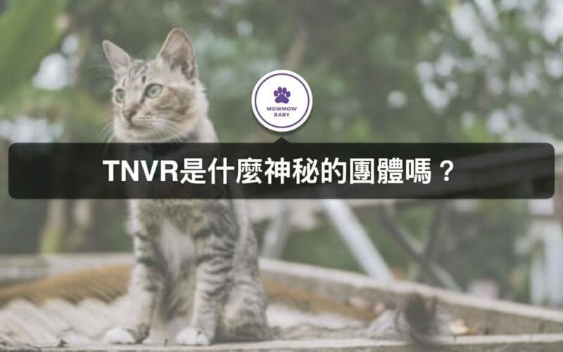 TNVR意思是幫助流浪貓狗進行結紮、原地、放養?