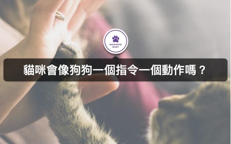 貓訓練過後能聽得懂人話嗎?貓管教訓練四大方法!