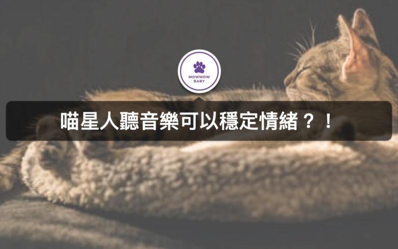 貓咪情緒不穩時聽音樂可以使貓咪情緒穩定?!