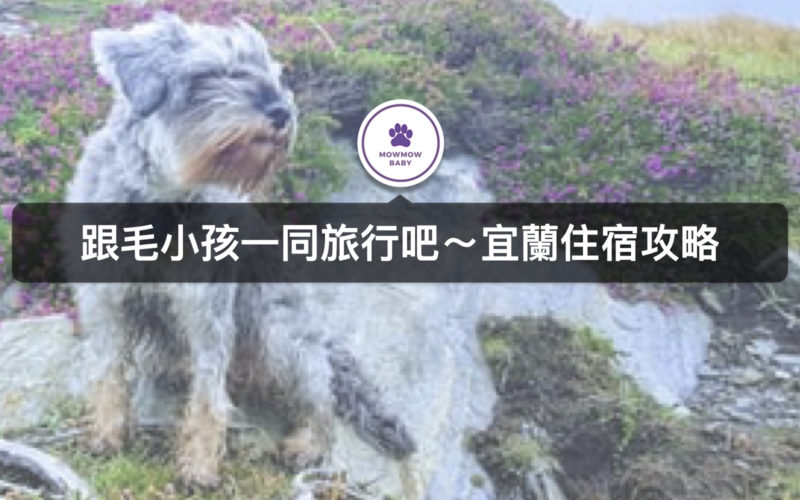 2020宜蘭寵物旅遊 寵物住宿攻略