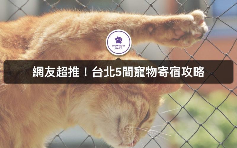 台北寵物寄宿竟然還設有狗狗安親班?!