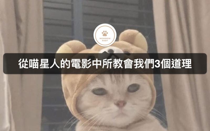 3部跟貓有關的日本電影,告訴我們人生的道理
