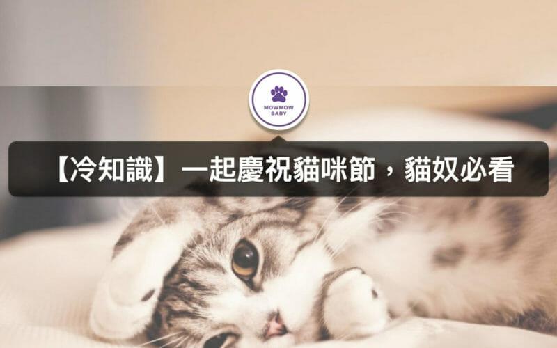 貓節是何時?台灣與國際貓節介紹與時間