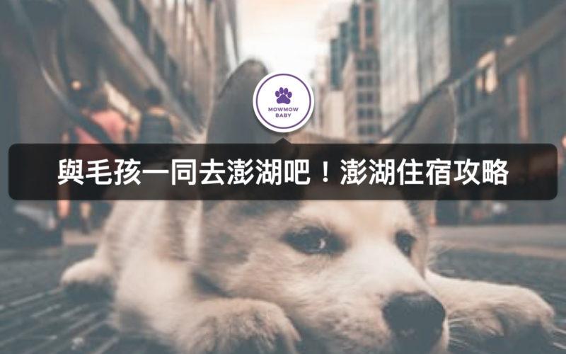 澎湖寵物旅遊 十間澎湖寵物民宿資訊