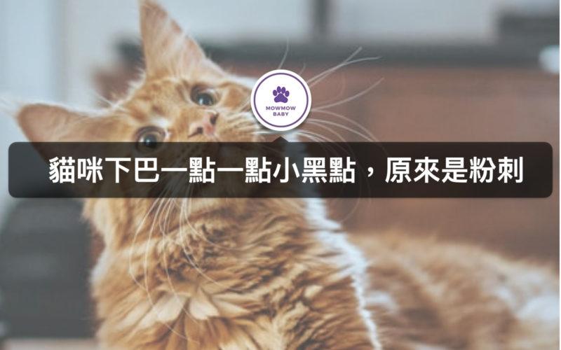 貓咪長粉刺?!原來貓下巴黑黑的是貓常見疾病之一!