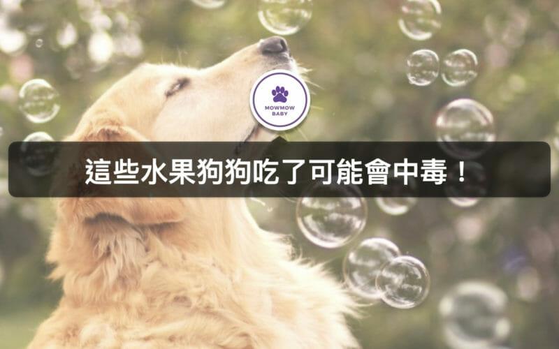 狗狗絕對不能吃這三種水果,寵物吃了可能會中毒的食物!一定要避免餵食