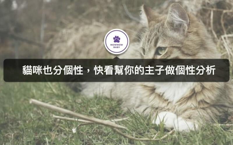 貓性格個性分類 5種貓的特質!快來看看主子屬於哪種?