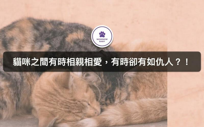 貓咪們到底是在打架還是玩耍?寵物行為身為主人的你不可不知!
