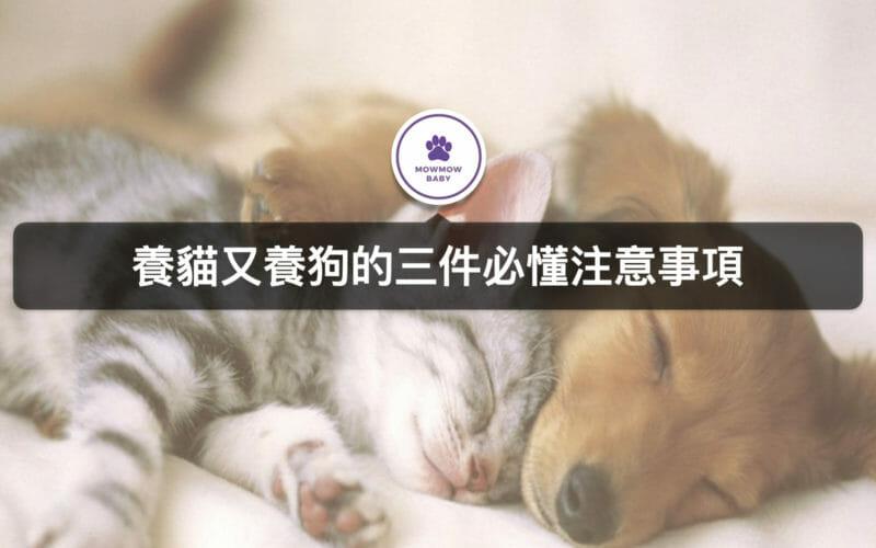 可以同時養貓咪又養狗狗嗎?如何讓貓狗和平相處不打架?