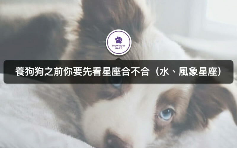 十二星座分別適合飼養什麼狗?(水、風象星座)
