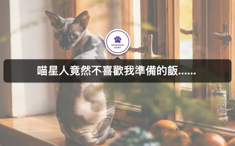 貓咪行為 貓埋食物難道是因為貓不喜歡我所準備的食物嗎?!