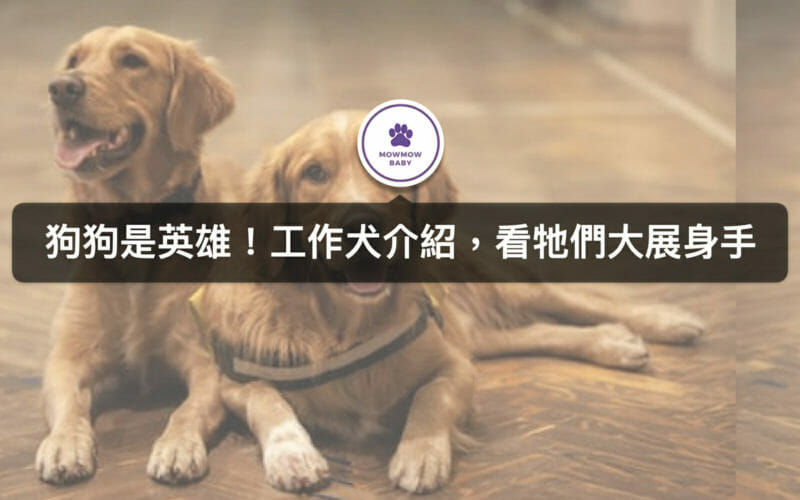 工作犬有哪些?除了導盲犬、緝毒犬,常見工作犬還有哪些呢?