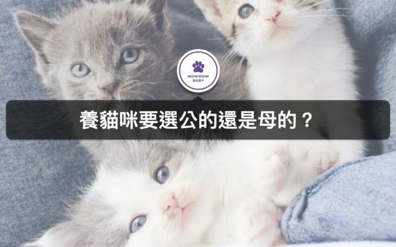第一次養貓咪,性別要選公的還是母的? 差別在哪裡?