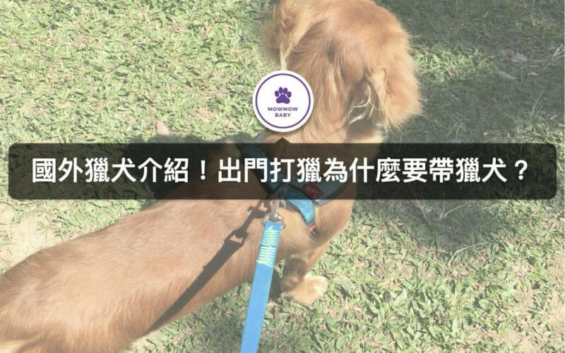 獵犬是會打獵的狗狗類型?尋血獵犬是聞血找獵物?