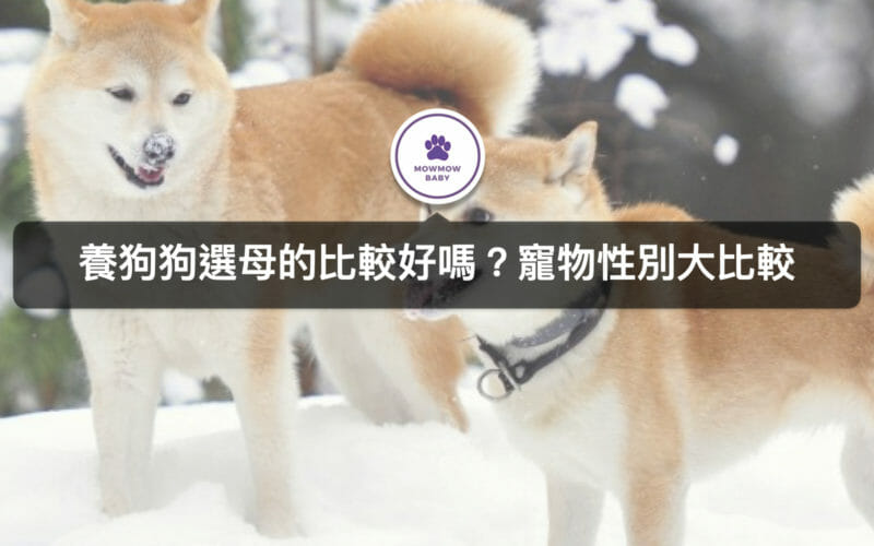 第一次養狗狗,要選公狗還是母狗,差別比較大全!