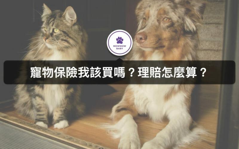 寵物保險是什麼? 如果貓咪狗狗生命會理賠嗎? 我該在哪裡幫寵物保保險?