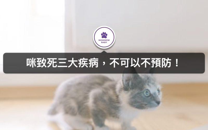 貓咪常見的疾病!我家貓咪是不是生病了?這個症狀最需要小心!