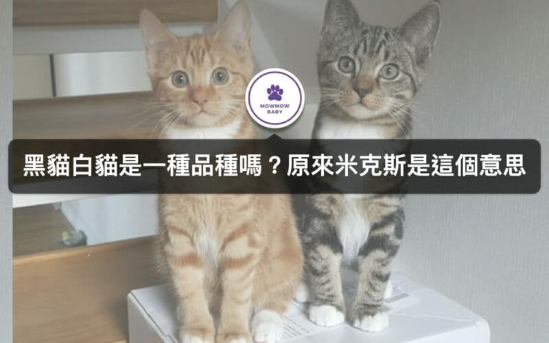 米克斯貓種類是指品種嗎?飼養米克斯貓的好處有哪些?