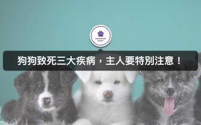 狗狗生病了嗎? 家裡狗狗最常見的3大傳染疾病! 不預防很有可能致命!