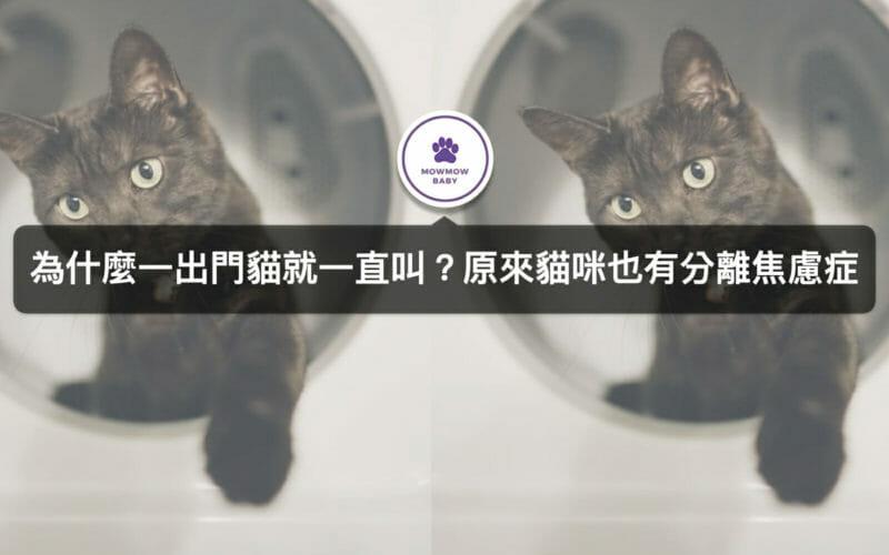 貓分離焦慮症—貓奴必知貓分離焦慮症狀有哪些以及如何治療