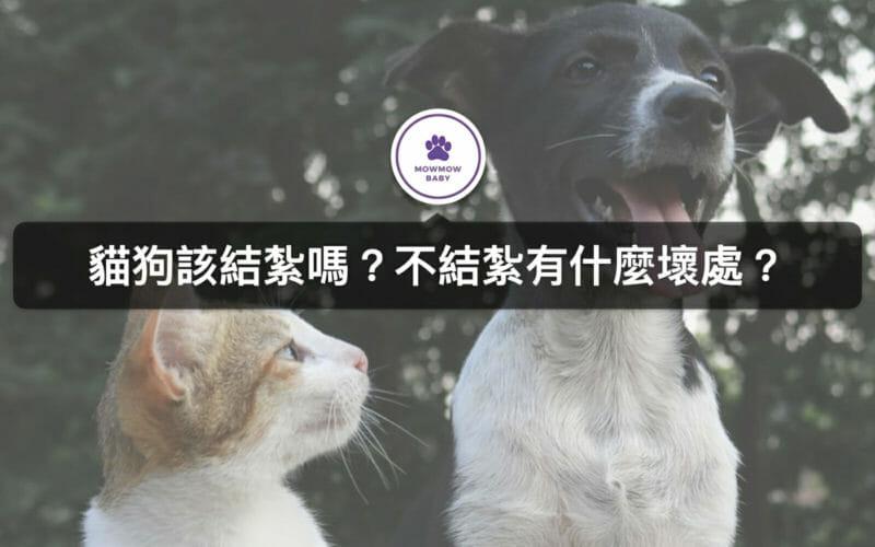 寵物該不該結紮?貓狗結紮時間有差別嗎?
