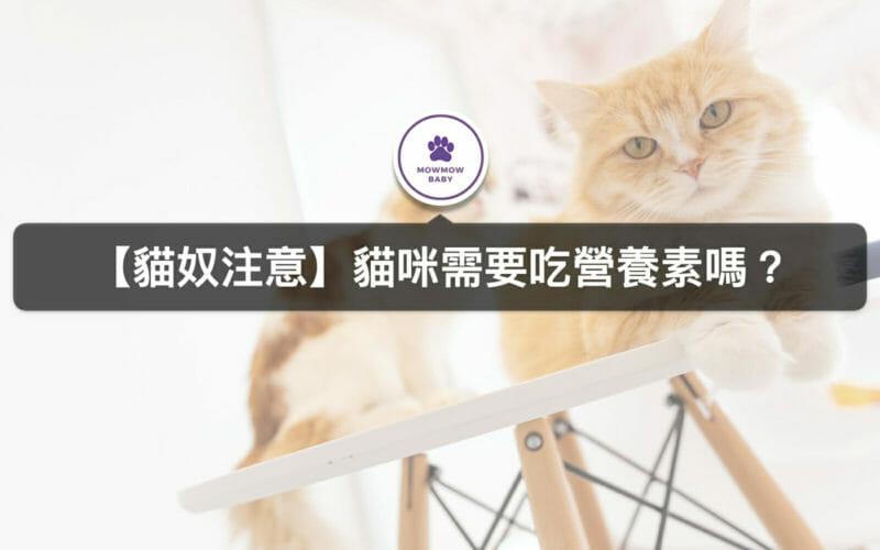 貓咪天生缺少哪3種維生素?貓咪所需營養維生素要怎麼補充?