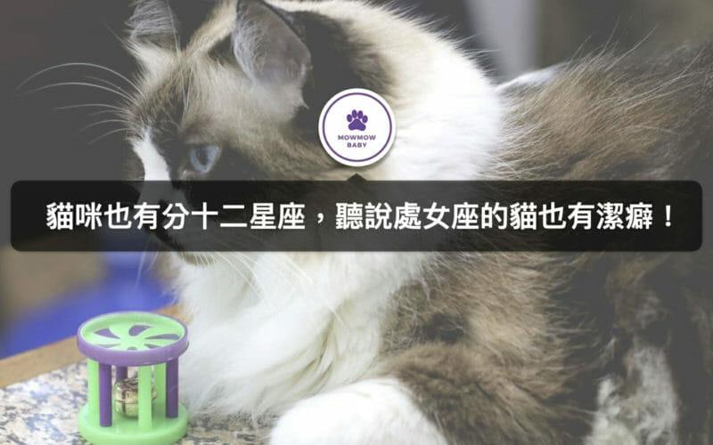 貓星座分析|貓咪個性聽說可從星座解析出來?