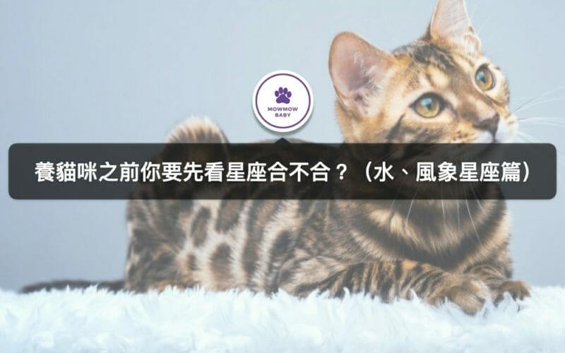 十二星座分別適合飼養什麼貓?(水、風象星座)
