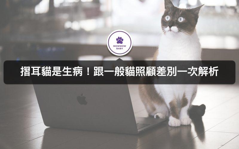 摺耳貓有這些疾病! 照顧飼養折耳貓要注意什麼? 跟一般喵咪差在哪裡?