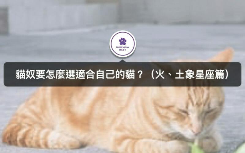 十二星座有專屬的貓咪?貓奴來看自己的星座貓是什麼吧(火、土象星座篇)