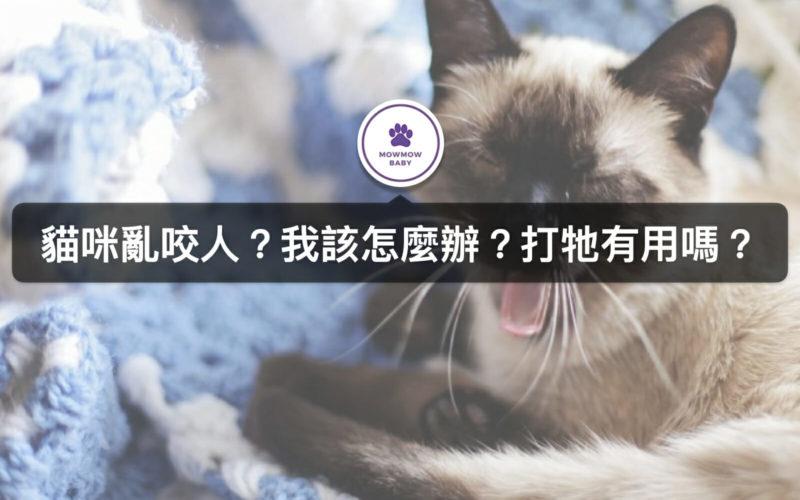貓亂咬人的原因以及該怎麼辦?如何改變貓咬人行為呢?