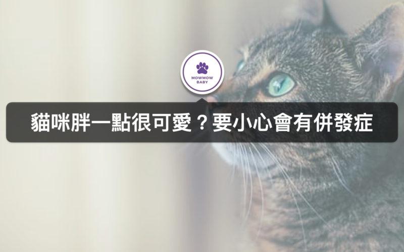 胖貓該減肥嗎?怎麼看貓體型是否需要減肥呢?