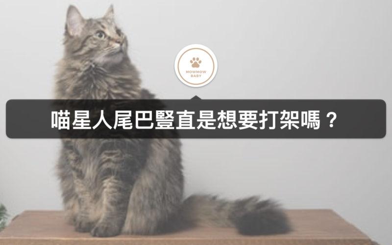 貓咪心情怎麼看,當貓尾巴炸毛或貓遙尾巴分別代表什麼意義?