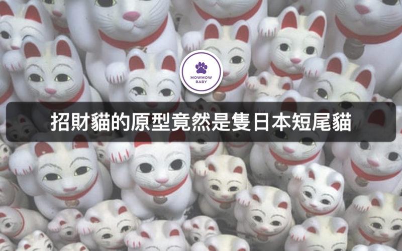 貓招財又招福?!關於招財貓由來及陶瓷招財貓的起源地